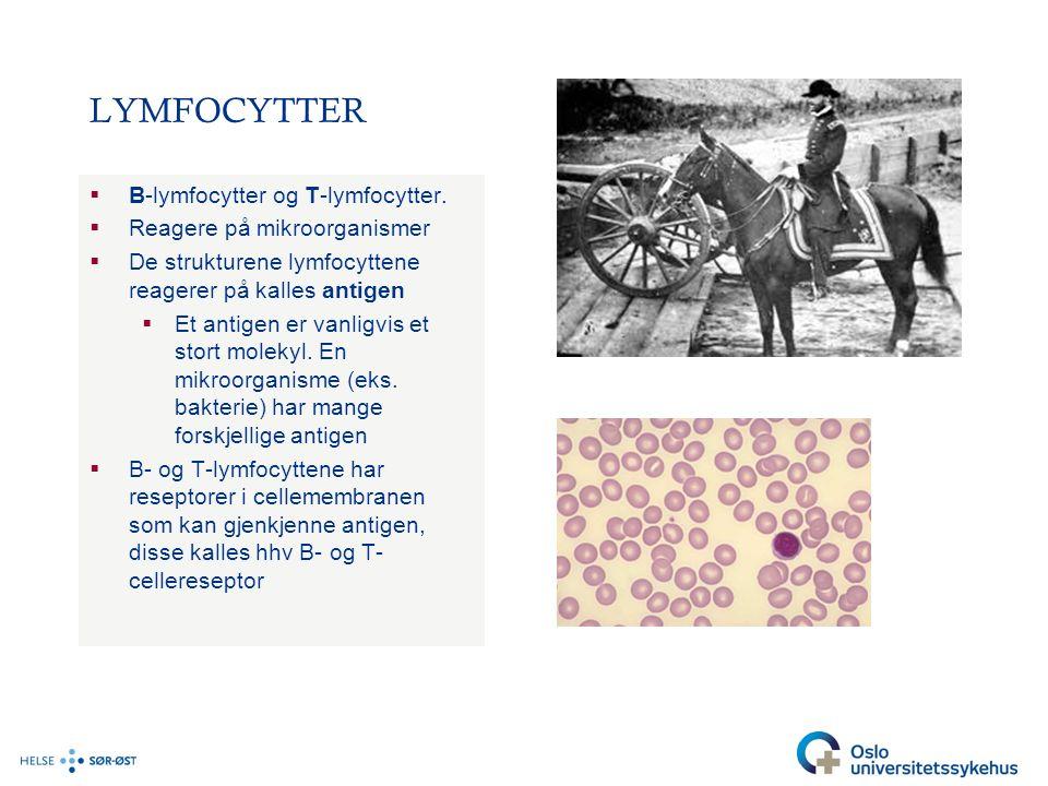 LYMFOCYTTER  B-lymfocytter og T-lymfocytter.  Reagere på mikroorganismer  De strukturene lymfocyttene reagerer på kalles antigen  Et antigen er va