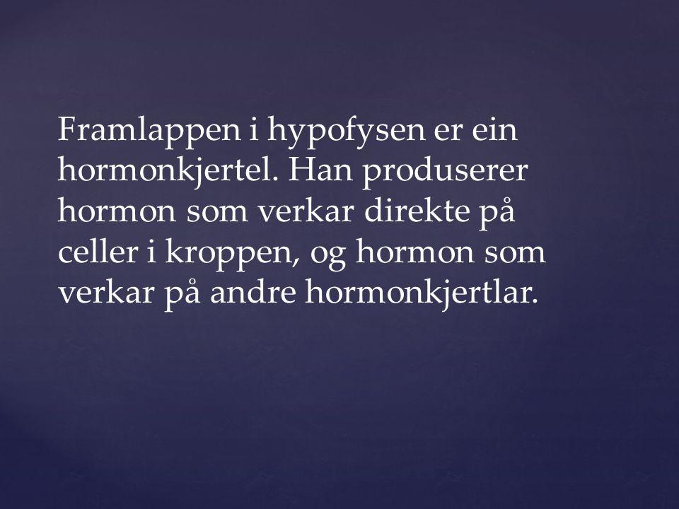 Framlappen i hypofysen er ein hormonkjertel.
