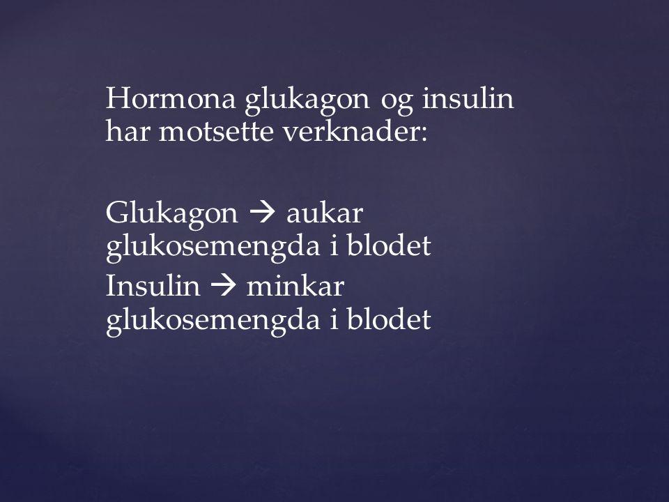 Hormona glukagon og insulin har motsette verknader: Glukagon  aukar glukosemengda i blodet Insulin  minkar glukosemengda i blodet
