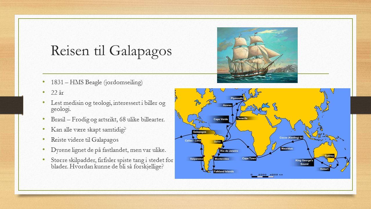 Reisen til Galapagos 1831 – HMS Beagle (jordomseiling) 22 år Lest medisin og teologi, interessert i biller og geologi. Brasil – Frodig og artsrikt, 68