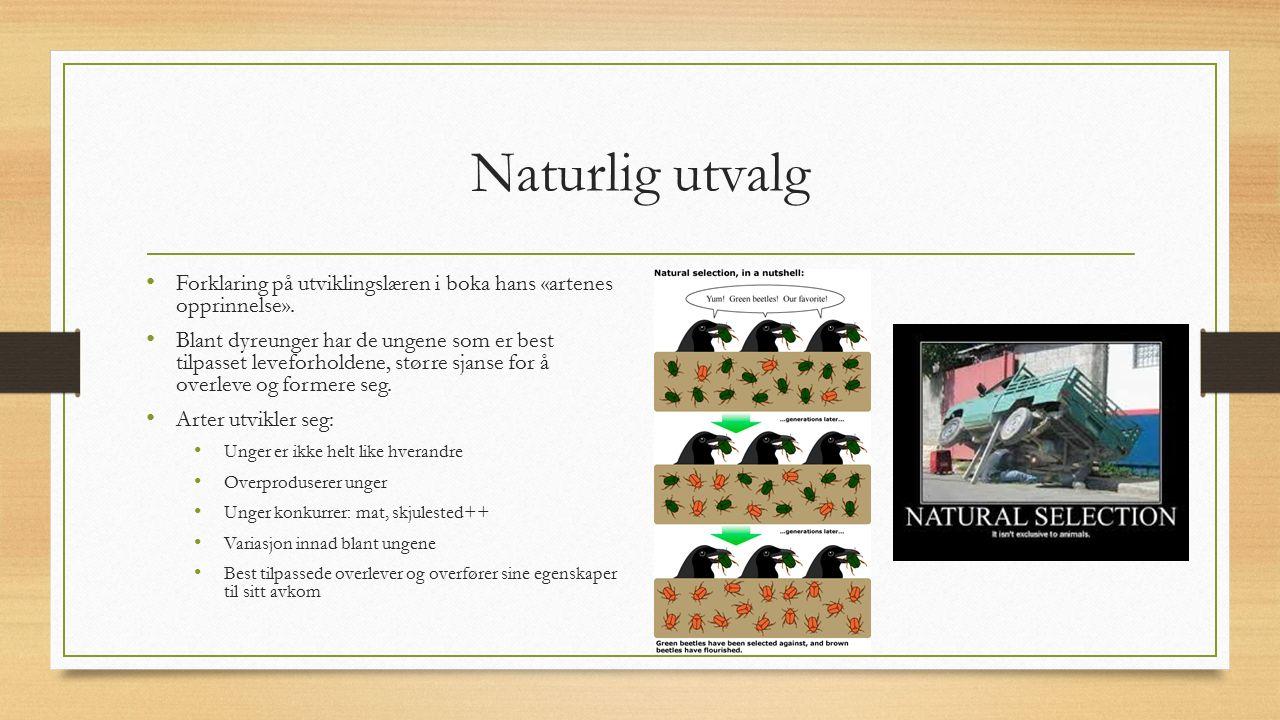 Naturlig utvalg Forklaring på utviklingslæren i boka hans «artenes opprinnelse». Blant dyreunger har de ungene som er best tilpasset leveforholdene, s
