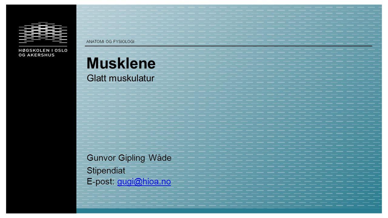 Musklene Glatt muskulatur Gunvor Gipling Wåde Stipendiat E-post: gugi@hioa.nogugi@hioa.no ANATOMI OG FYSIOLOGI