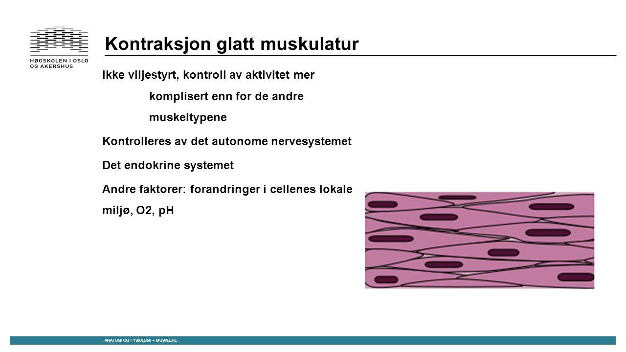 Kontraksjon glatt muskulatur Ikke viljestyrt, kontroll av aktivitet mer komplisert enn for de andre muskeltypene Kontrolleres av det autonome nervesystemet Det endokrine systemet Andre faktorer: forandringer i cellenes lokale miljø, O2, pH ANATOMI OG FYSIOLOGI – MUSKLENE