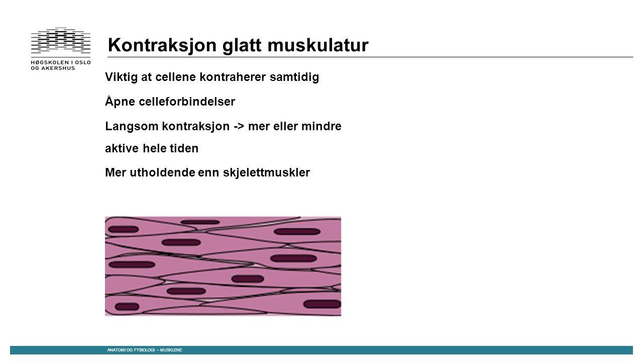 Kontraksjon glatt muskulatur Viktig at cellene kontraherer samtidig Åpne celleforbindelser Langsom kontraksjon -> mer eller mindre aktive hele tiden Mer utholdende enn skjelettmuskler ANATOMI OG FYSIOLOGI – MUSKLENE