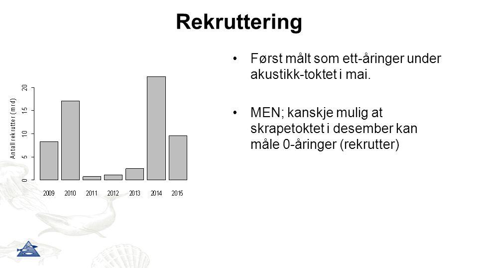 Rekruttering Først målt som ett-åringer under akustikk-toktet i mai. MEN; kanskje mulig at skrapetoktet i desember kan måle 0-åringer (rekrutter)