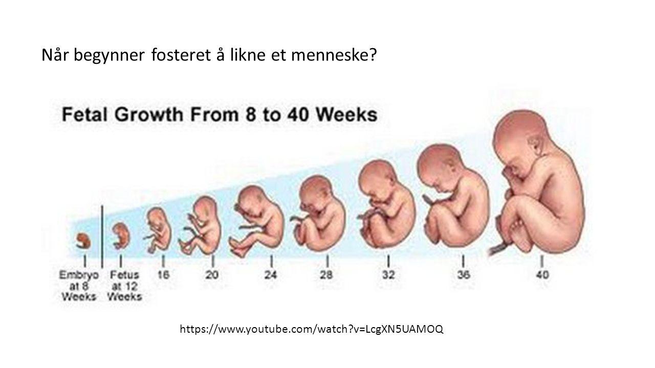 Når begynner fosteret å likne et menneske? https://www.youtube.com/watch?v=LcgXN5UAMOQ