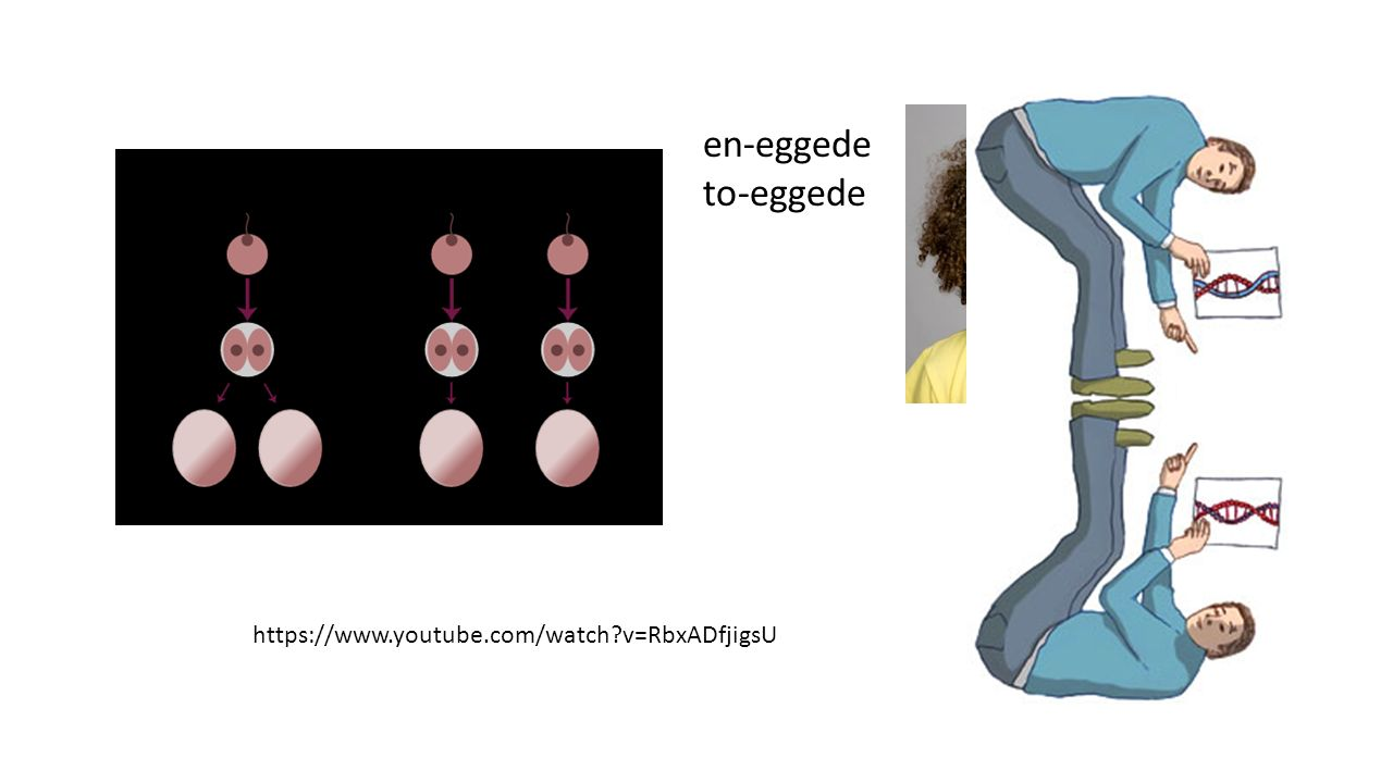 https://www.youtube.com/watch?v=RbxADfjigsU en-eggede to-eggede