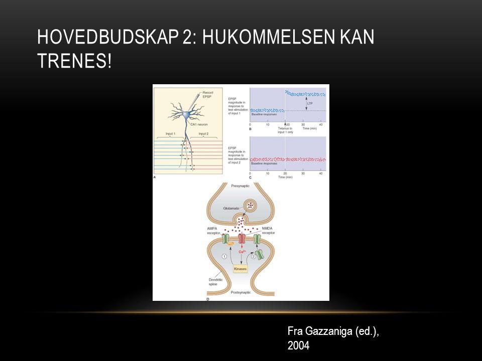 HOVEDBUDSKAP 2: HUKOMMELSEN KAN TRENES! Fra Gazzaniga (ed.), 2004