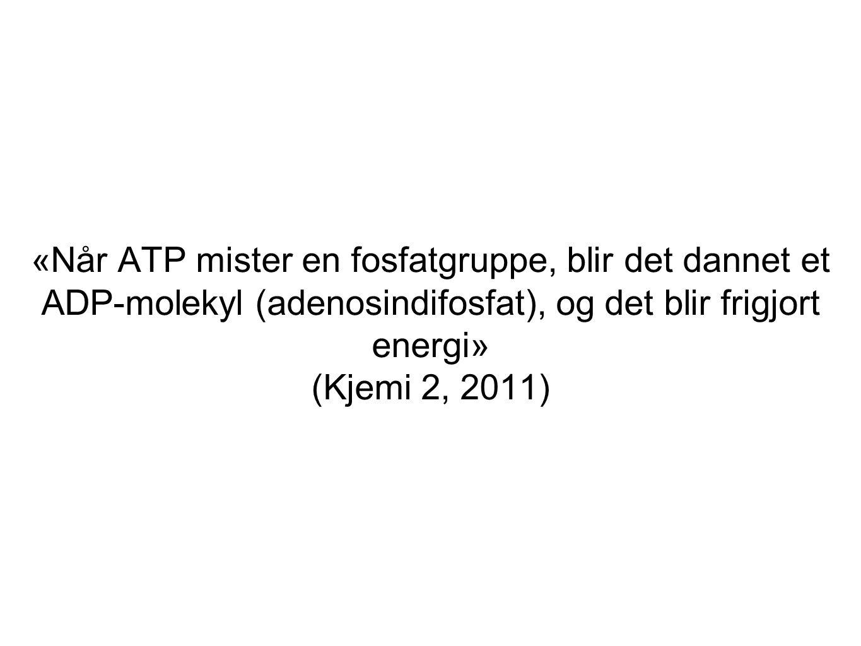 «Når ATP mister en fosfatgruppe, blir det dannet et ADP-molekyl (adenosindifosfat), og det blir frigjort energi» (Kjemi 2, 2011)