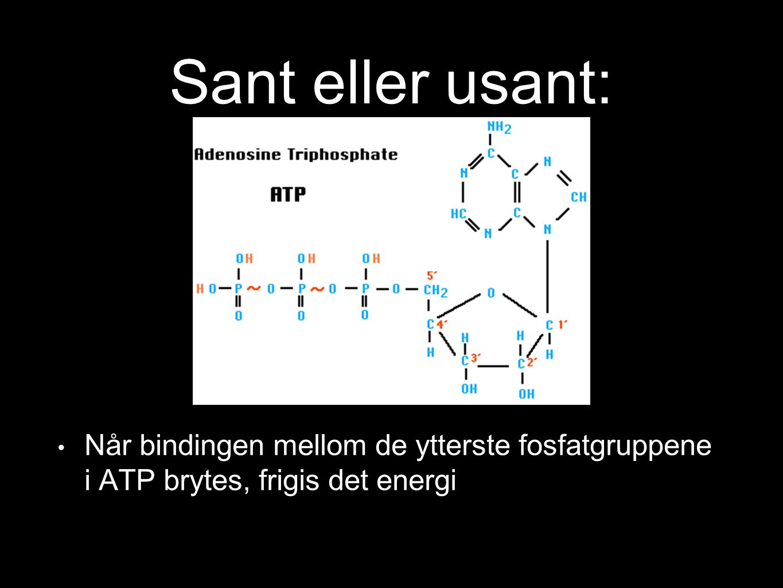 Sant eller usant: Når bindingen mellom de ytterste fosfatgruppene i ATP brytes, frigis det energi Ja 14 100%