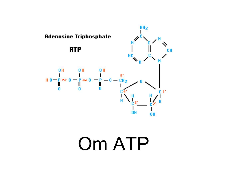 Om ATP