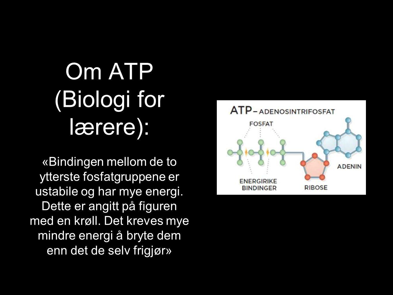 Om ATP (Biologi for lærere): «Bindingen mellom de to ytterste fosfatgruppene er ustabile og har mye energi. Dette er angitt på figuren med en krøll. D
