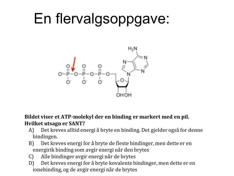 Bildet viser et ATP-molekyl der en binding er markert med en pil. Hvilket utsagn er SANT? A)Det kreves alltid energi å bryte en binding. Det gjelder o