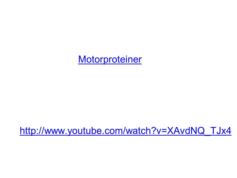 http://www.youtube.com/watch v=XAvdNQ_TJx4 Motorproteiner
