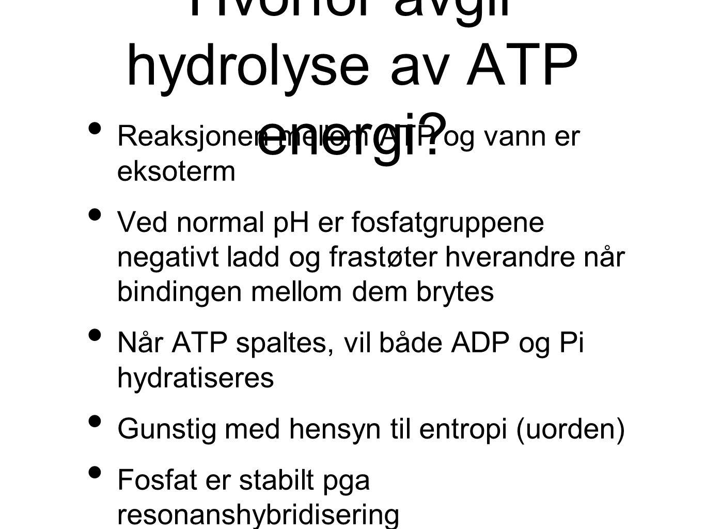 Hvorfor avgir hydrolyse av ATP energi? Reaksjonen mellom ATP og vann er eksoterm Ved normal pH er fosfatgruppene negativt ladd og frastøter hverandre