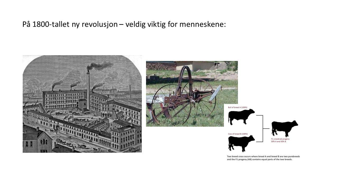 På 1800-tallet ny revolusjon – veldig viktig for menneskene:
