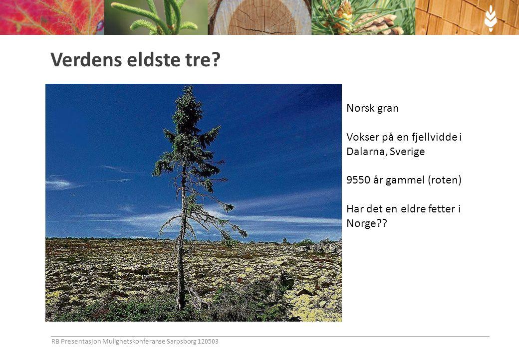 Hva skal vi bruke skogen til i fremtiden? RB Presentasjon Mulighetskonferanse Sarpsborg 120503