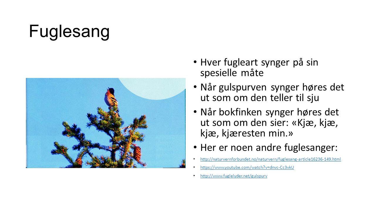 Fuglesang Hver fugleart synger på sin spesielle måte Når gulspurven synger høres det ut som om den teller til sju Når bokfinken synger høres det ut som om den sier: «Kjæ, kjæ, kjæ, kjæresten min.» Her er noen andre fuglesanger: http://naturvernforbundet.no/naturvern/fuglesang-article16236-149.html https://www.youtube.com/watch v=dnvc-Cc3vkU http://www.fuglelyder.net/gulspurv