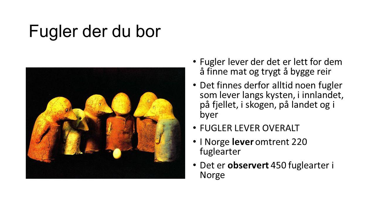 Fugler der du bor Fugler lever der det er lett for dem å finne mat og trygt å bygge reir Det finnes derfor alltid noen fugler som lever langs kysten, i innlandet, på fjellet, i skogen, på landet og i byer FUGLER LEVER OVERALT I Norge lever omtrent 220 fuglearter Det er observert 450 fuglearter i Norge