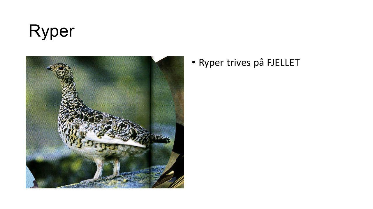 Ryper Ryper trives på FJELLET