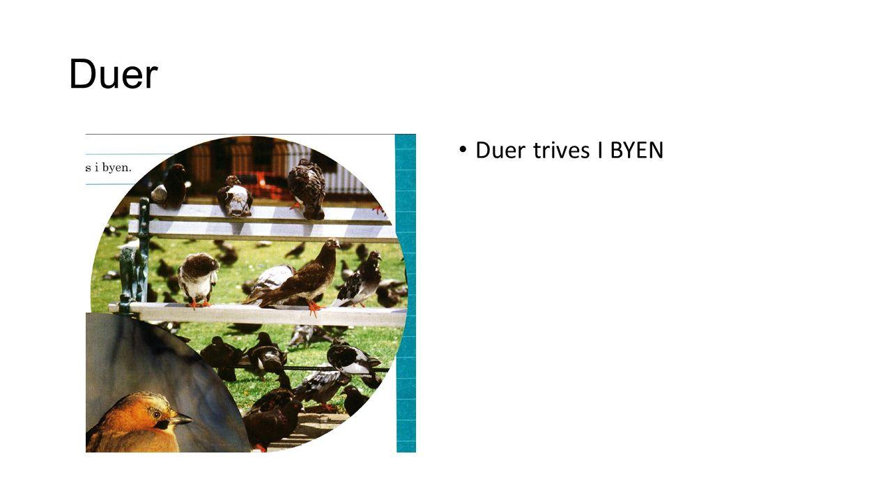 Duer Duer trives I BYEN