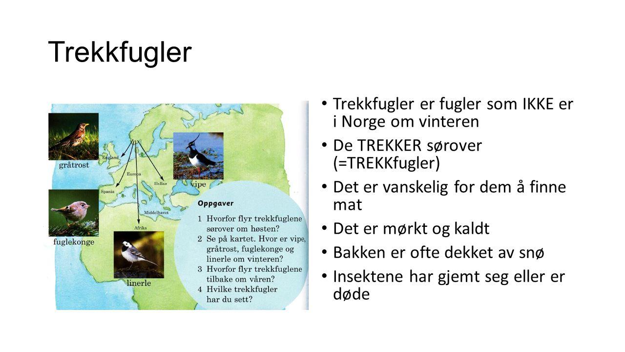 Trekkfugler Trekkfugler er fugler som IKKE er i Norge om vinteren De TREKKER sørover (=TREKKfugler) Det er vanskelig for dem å finne mat Det er mørkt og kaldt Bakken er ofte dekket av snø Insektene har gjemt seg eller er døde