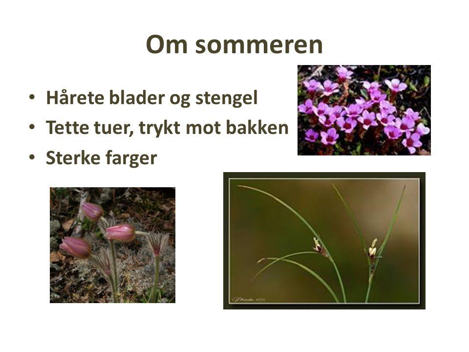 Plantespisere i fjellet Fjellrotte Lemen Villrein