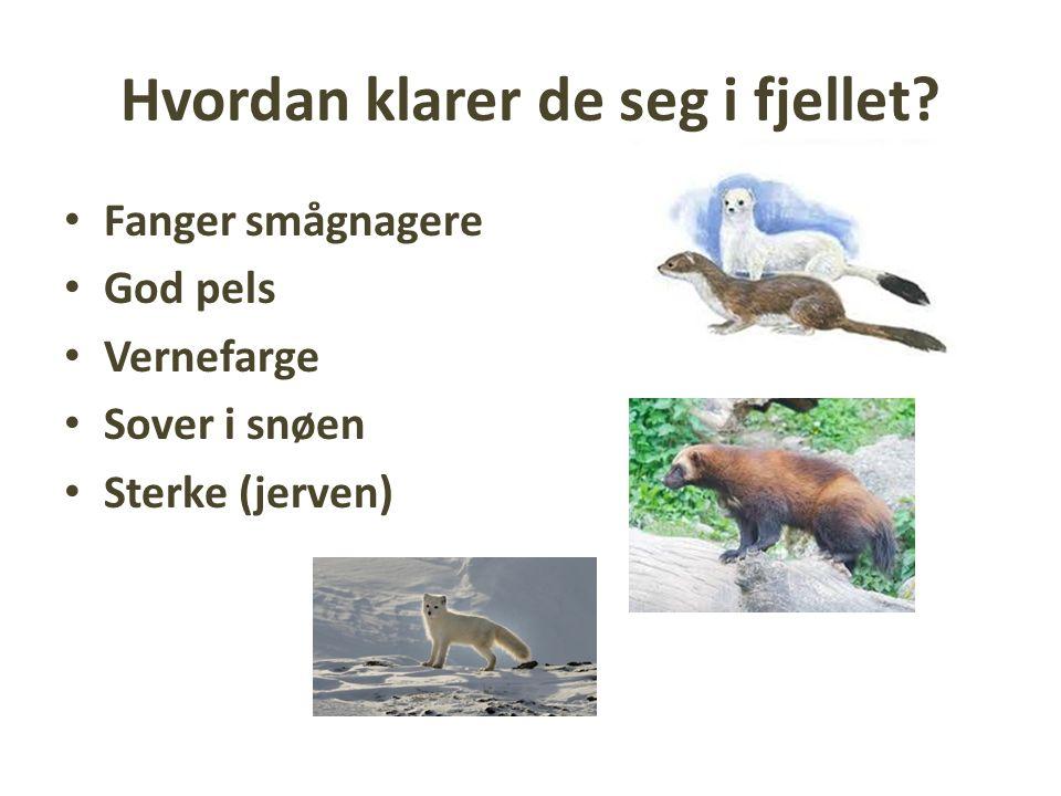 Oppgave Gaia natur: s.44-49 Lag ei liste over blomster og dyr i fjellet Til hver blomst/dyr 1.