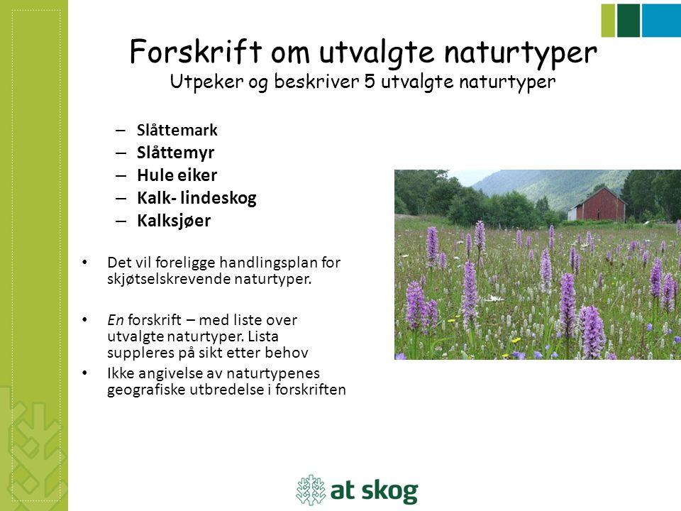 Forskrift om utvalgte naturtyper Utpeker og beskriver 5 utvalgte naturtyper – Slåttemark – Slåttemyr – Hule eiker – Kalk- lindeskog – Kalksjøer Det vi