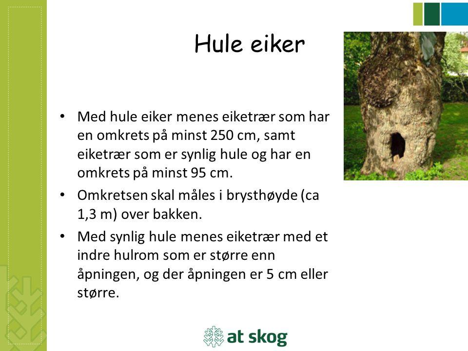 Hule eiker Med hule eiker menes eiketrær som har en omkrets på minst 250 cm, samt eiketrær som er synlig hule og har en omkrets på minst 95 cm. Omkret