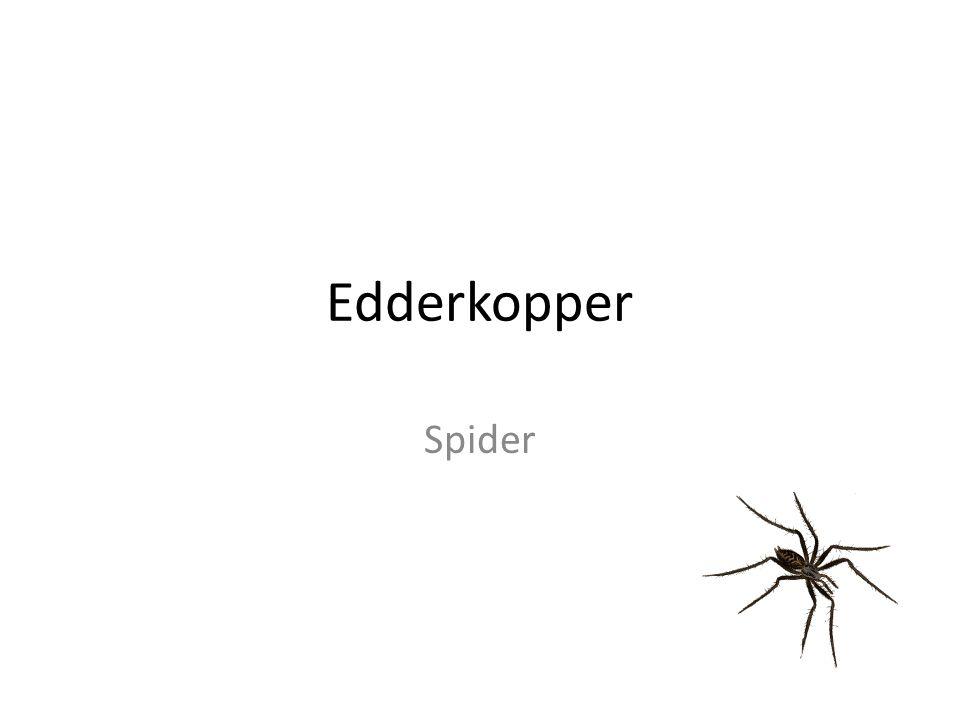 Edderkopper Spider