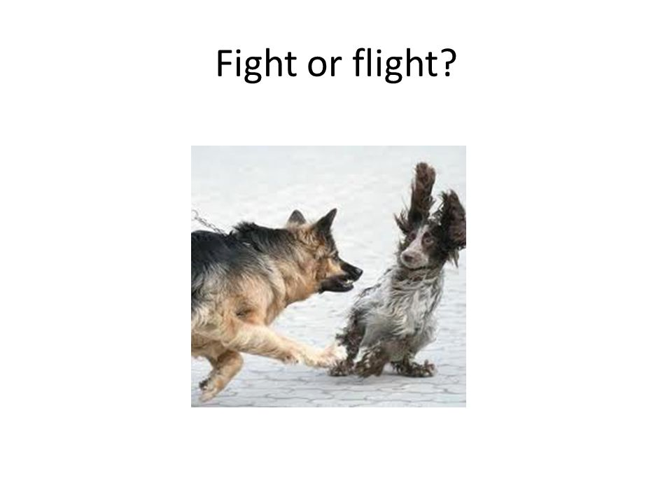 Fight or flight?