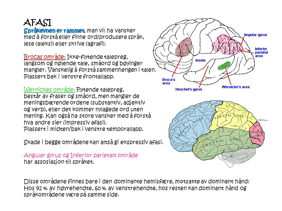 Motorisk cortex styrer fysiske aspekt ved tale Brocas område påvirker språkproduksjon Wernickes område bearbeider informasjon fra syn og det talte ord Visuell cortex bearbeider det skrevne ord Hørselscortex bearbeider det talte ord Hvordan hjernen kontrollerer språket