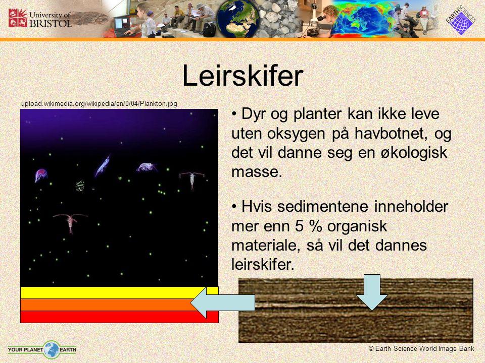 Leirskifer upload.wikimedia.org/wikipedia/en/0/04/Plankton.jpg Dyr og planter kan ikke leve uten oksygen på havbotnet, og det vil danne seg en økologisk masse.
