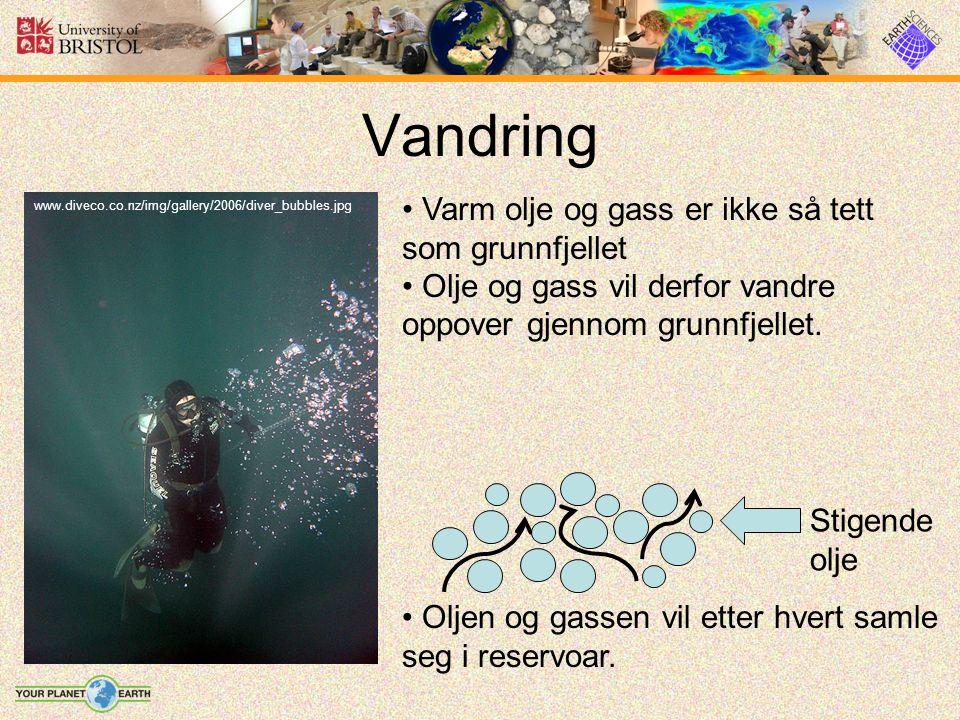 Vandring www.diveco.co.nz/img/gallery/2006/diver_bubbles.jpg Varm olje og gass er ikke så tett som grunnfjellet Olje og gass vil derfor vandre oppover gjennom grunnfjellet.