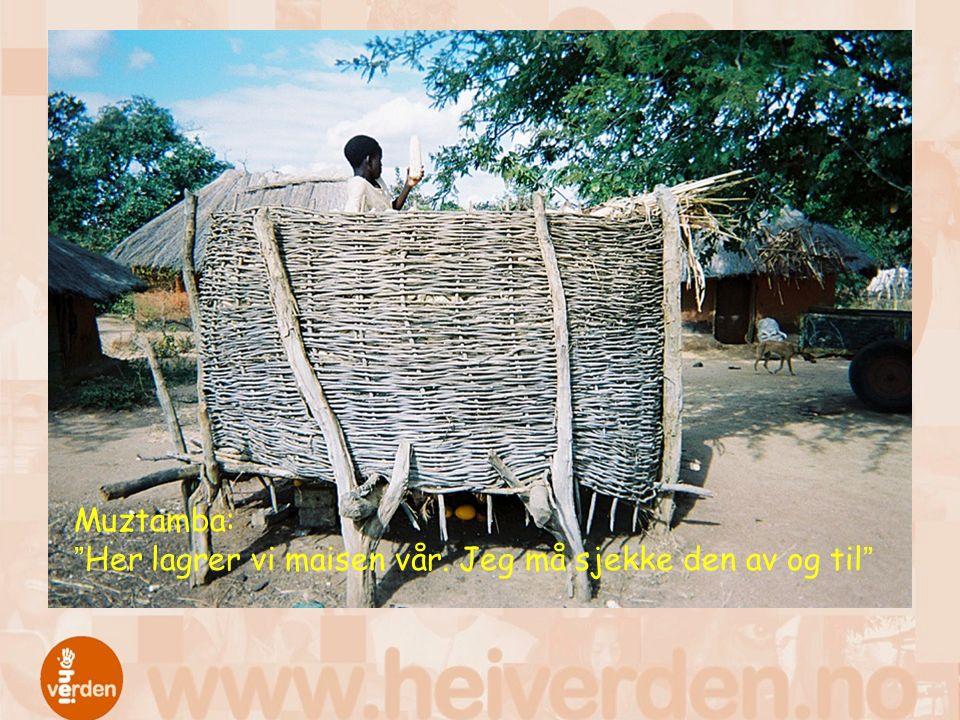 Muztamba: Her lagrer vi maisen vår. Jeg må sjekke den av og til