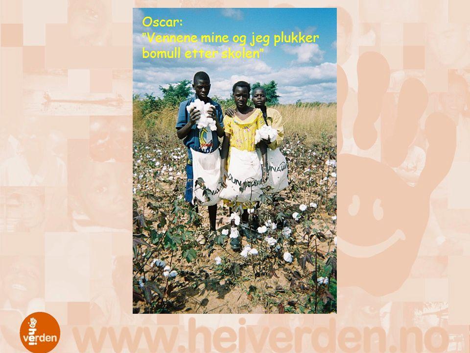 Oscar: Vennene mine og jeg plukker bomull etter skolen