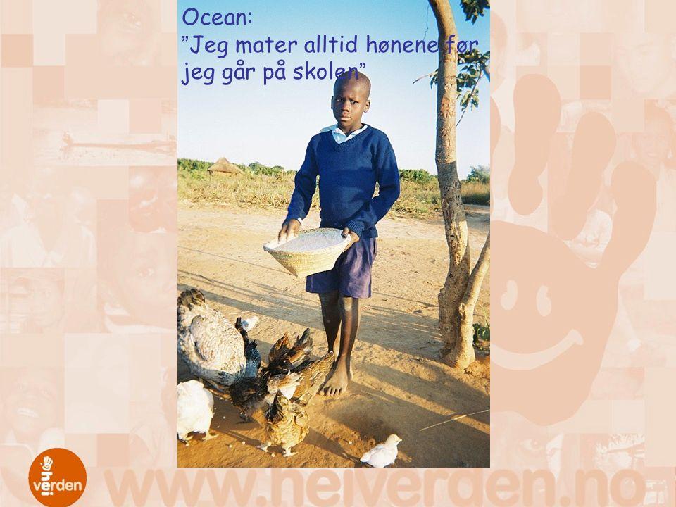 Ocean: Jeg mater alltid hønene før jeg går på skolen