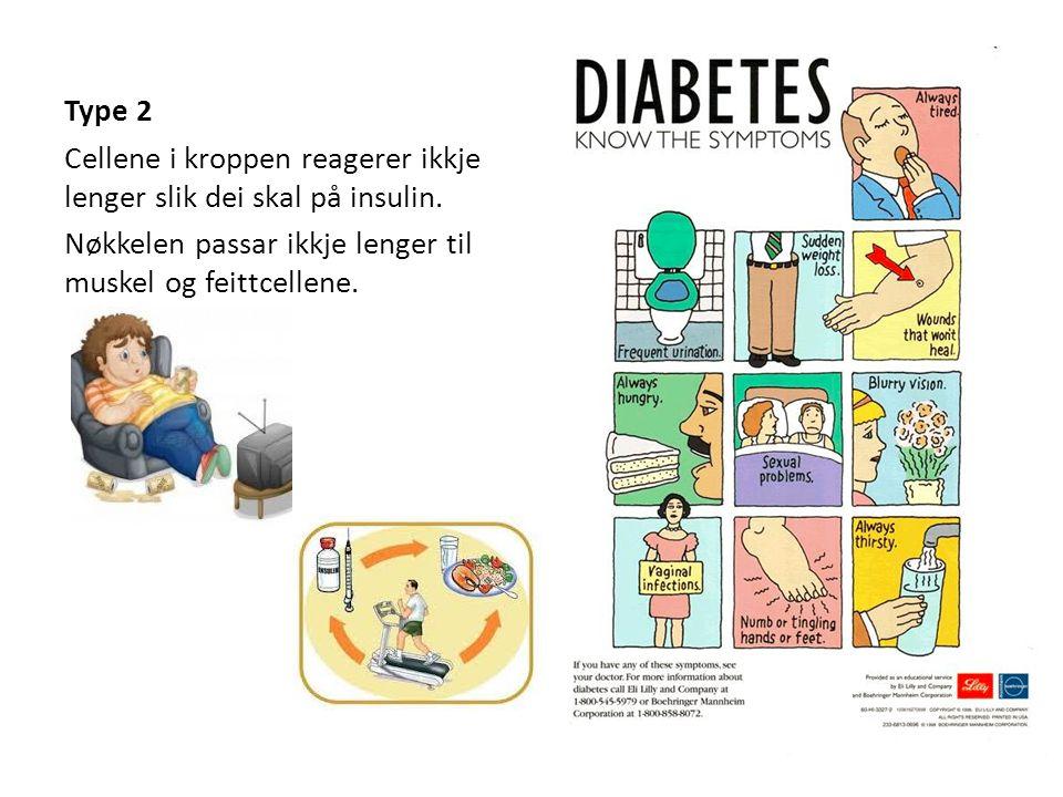 Type 2 Cellene i kroppen reagerer ikkje lenger slik dei skal på insulin.