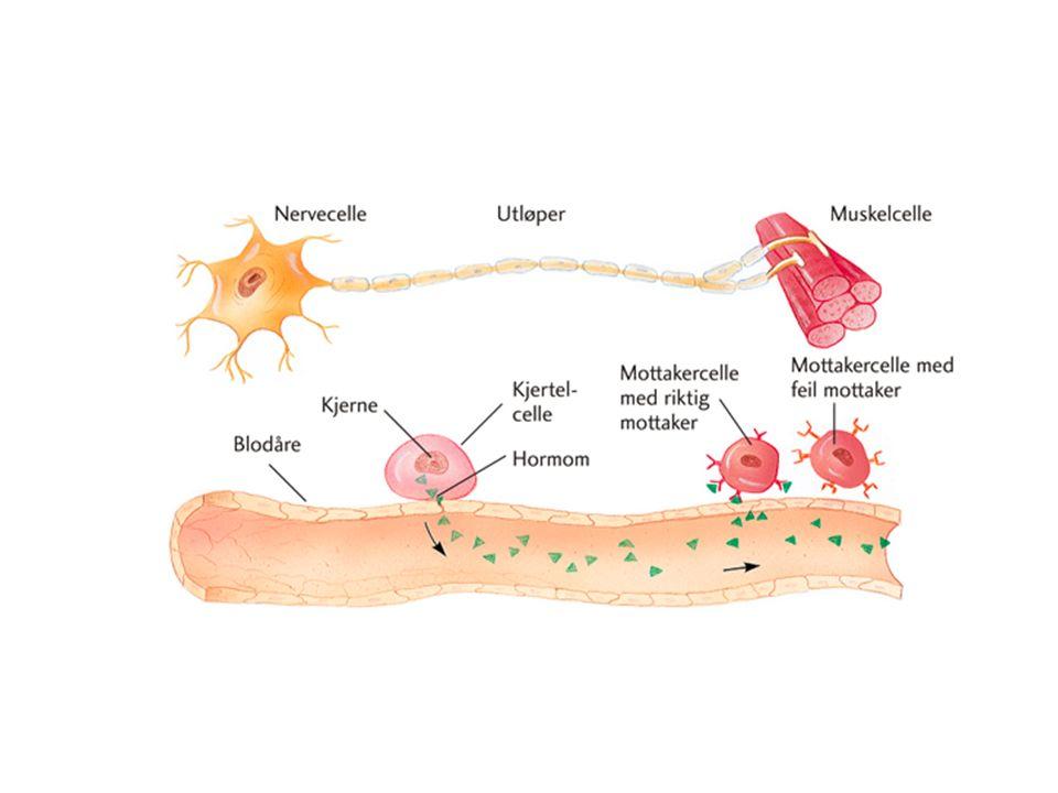 Mål for timen Beskrive hormonsystemet Fortelje korleis hormon styrer ulike prosessar i kroppen