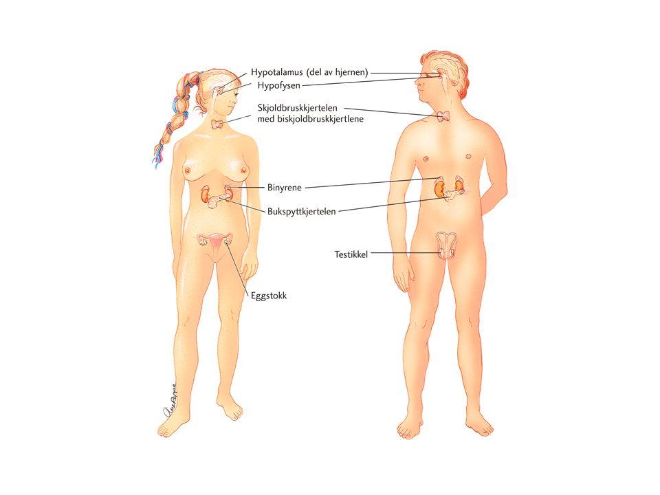 Hormon og pubertet Du vert vaksen, og du merkar det på kropp og sinn.