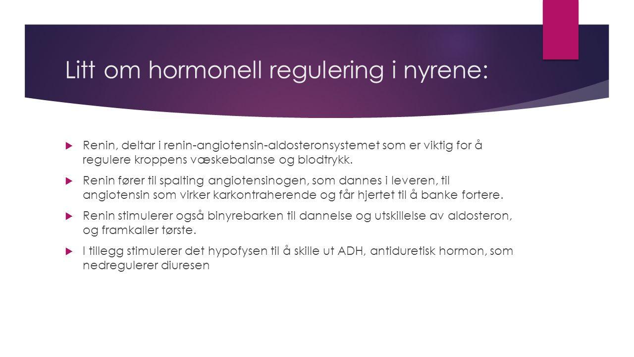 Litt om hormonell regulering i nyrene:  Renin, deltar i renin-angiotensin-aldosteronsystemet som er viktig for å regulere kroppens væskebalanse og blodtrykk.