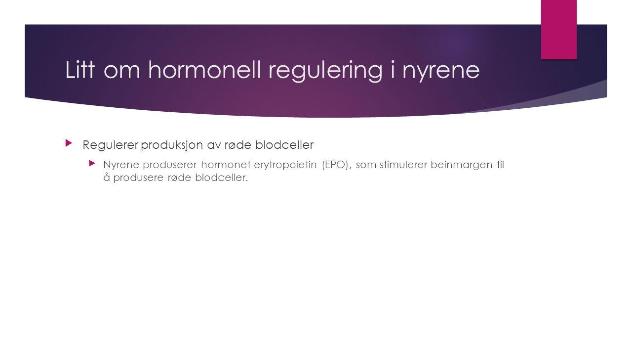 Litt om hormonell regulering i nyrene Regulerer produksjon av røde blodceller Nyrene produserer hormonet erytropoietin (EPO), som stimulerer beinmargen til å produsere røde blodceller.
