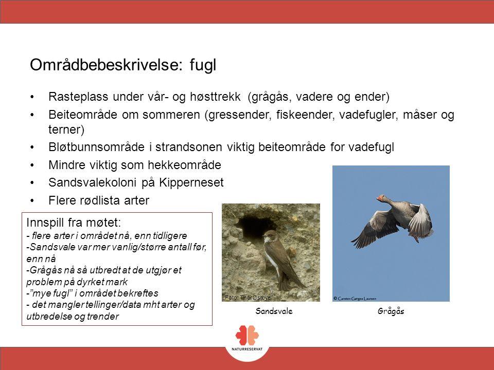 Områdbebeskrivelse: fugl Brushane ARTSTATUS RØDLISTA FiskemåseNT HettemåseNT MakrellterneVU StrandsnipeNT VipeNT StorspoveNT BrushaneVU StjertandNT SjøorreNT StorlomNT TyvjoNT HønsehaukNT FiskeørnNT Biofoto/Erik Thomsen NT=nær trua VU=sårbar Hettemåse Frode Falkenberg
