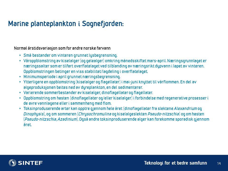 Teknologi for et bedre samfunn 14 Marine planteplankton i Sognefjorden: Små bestander om vinteren grunnet lysbegrensning. Våroppblomstring av kiselalg
