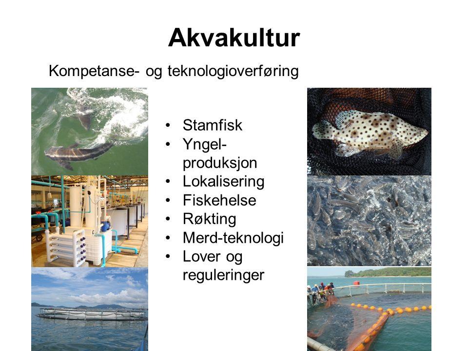 Akvakultur Kompetanse- og teknologioverføring Stamfisk Yngel- produksjon Lokalisering Fiskehelse Røkting Merd-teknologi Lover og reguleringer