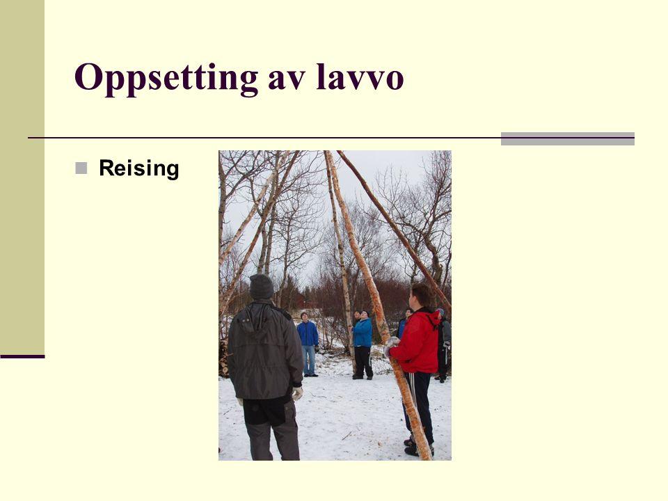 Oppsetting av lavvo Reising