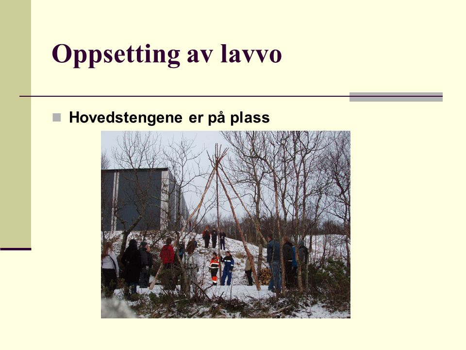 Oppsetting av lavvo Hovedstengene er på plass