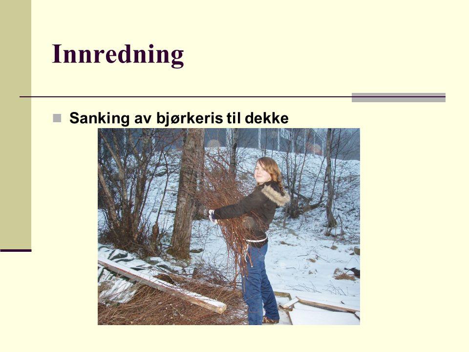 Innredning Sanking av bjørkeris til dekke