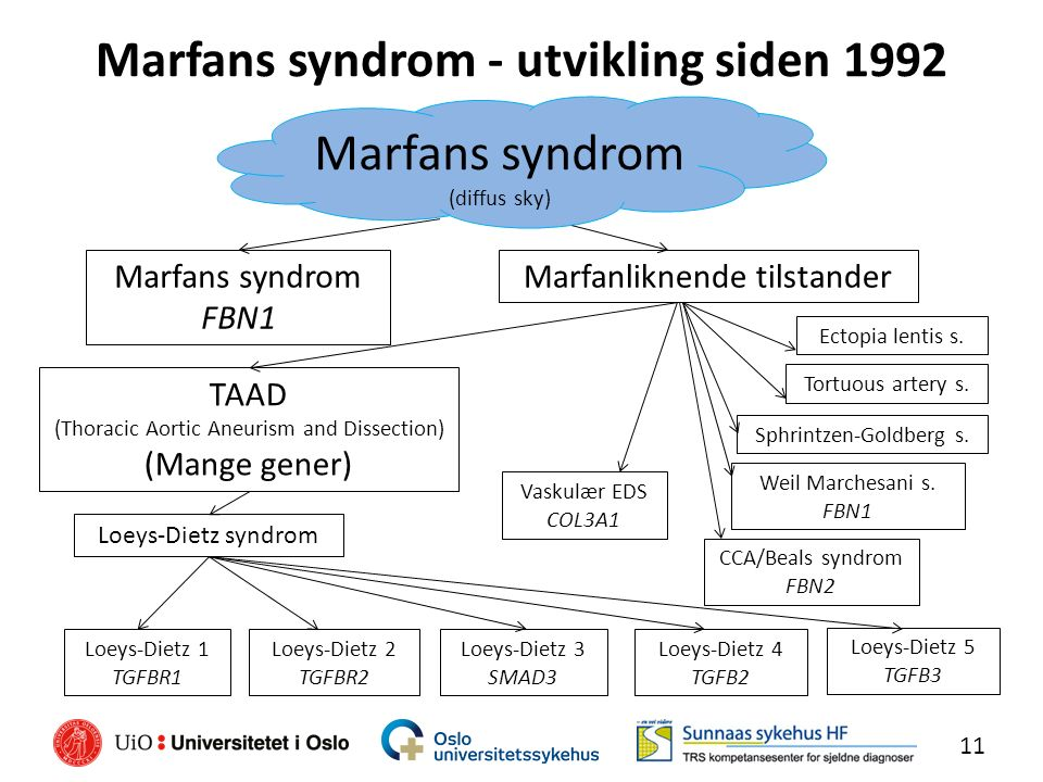 Marfans syndrom - utvikling siden 1992 11 Marfans syndrom (diffus sky) Marfans syndrom FBN1 Marfanliknende tilstander TAAD (Thoracic Aortic Aneurism a